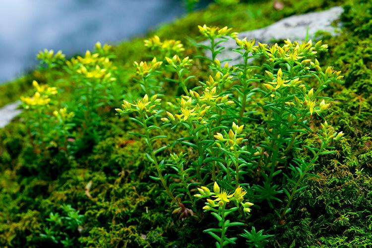 白神山地有多种多样的植物_2
