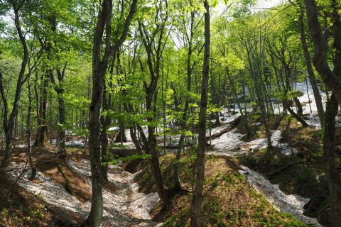 """漫步""""世界遗产的山间小径  山毛榉林散步道""""(春季~秋季的旅游项目)"""