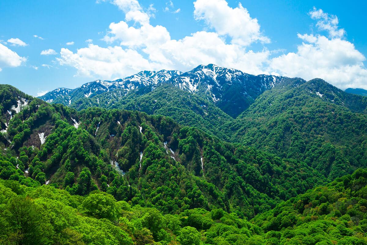 誕生於距今約8000年前的白神山地櫸木林