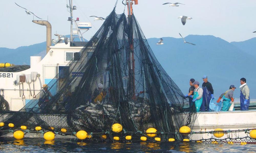 白神之海的漁師體驗(深浦町)