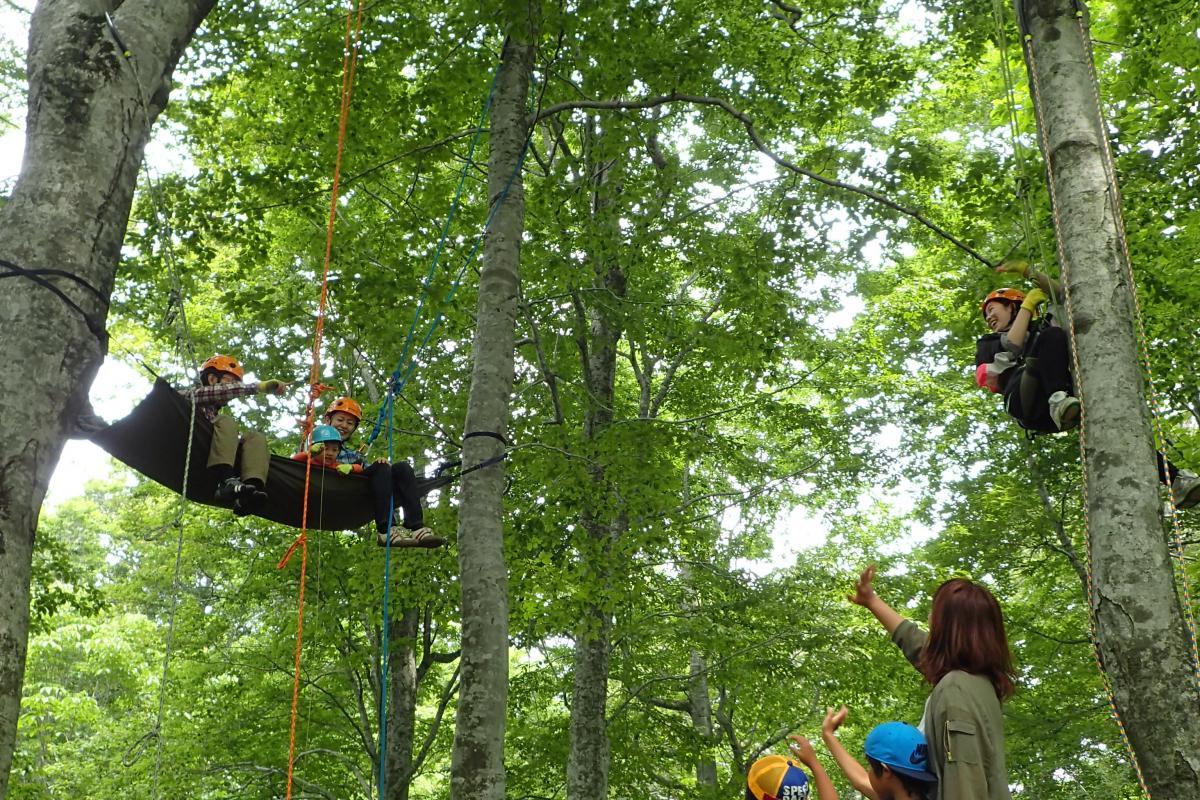 櫸木森林的爬樹體驗