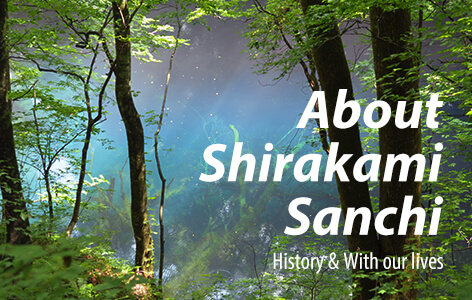 History and lives of Shirakami Sanchi