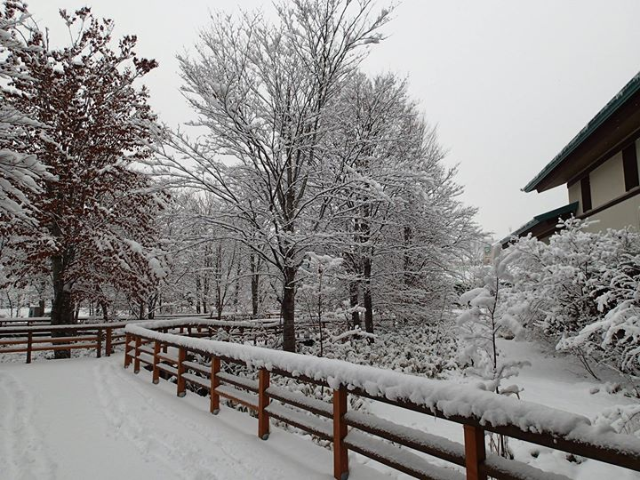 白神山地の冬景色
